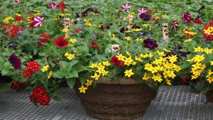 banners-plant-sale